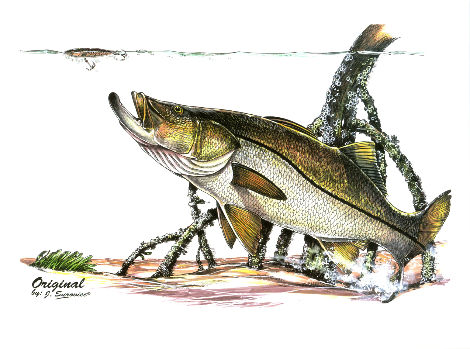 Free snook fish coloring pages for Fishing for snook